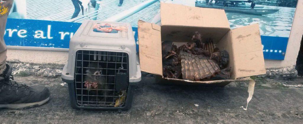 ras una inspección de lanchas en el río Napo, a la altura de la comunidad de Pompeya, la Armada decomisó el 16 de abril pasado 15 libras de huangana, guanta y caimán, y un ejemplar vivo de mono varizo. Foto: Armada Ecuador