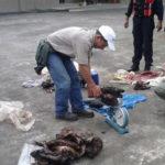 Consumo de carne silvestre pone en jaque a especies amenazadas