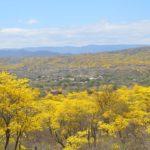 El turismo es la tabla de salvación del guayacán