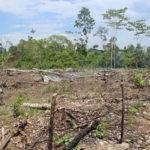 Medio Ambiente: lo bueno, lo malo y lo feo de los 10 años de Correa