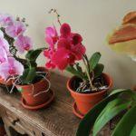 #NosFaltan3: Un año después, las orquídeas de Paúl florecieron